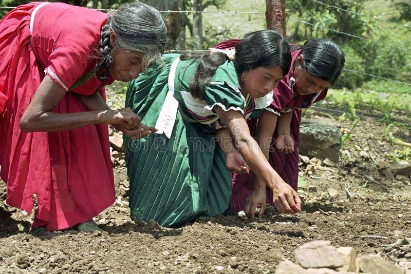 Guatemaltekische indische Frauen, die Gemüsesamen säen lizenzfreie stockfotos
