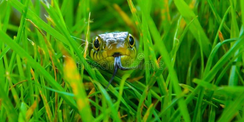 ¡GUAU, mirada en la serpiente!