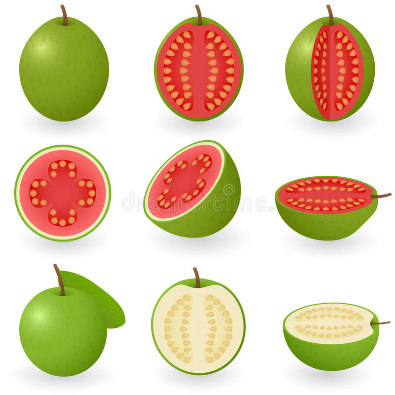 Guava stock illustration
