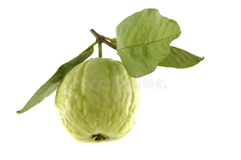 guava obraz stock