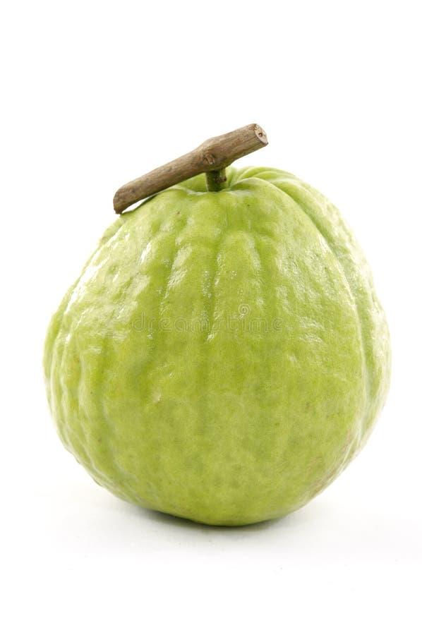 guava obrazy stock