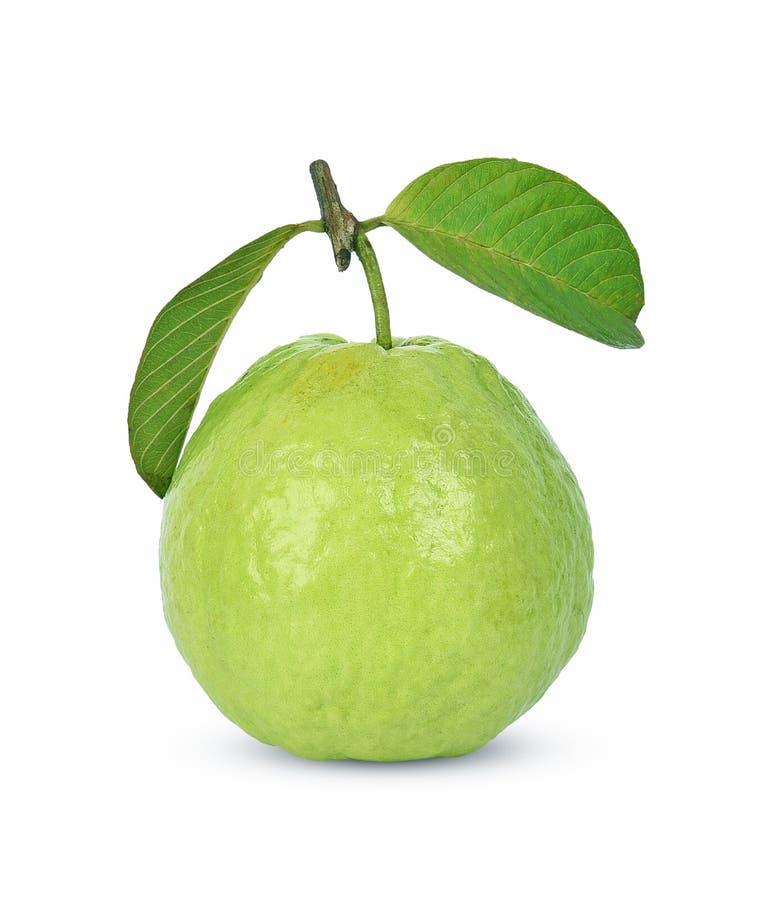 Guava fruit isolated on white background. stock image