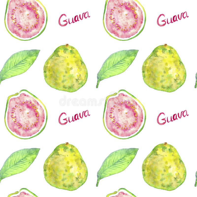 Guava fruits and cut halves and green leaves with inscription, hand painted watercolor illustration, seamless pattern design stock photography