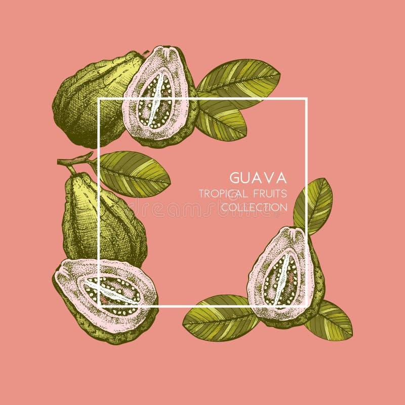 Guava hand drawn illustration. Engraved botanical sketch. Vintage gold frame. Tropical plant design. Wedding template royalty free illustration