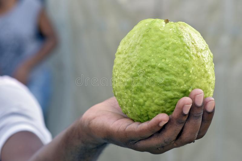 Guava in the hand of open air market seller. Closeup of guava in the hand of open air market seller. Sao Paulo city, Brazil stock photo