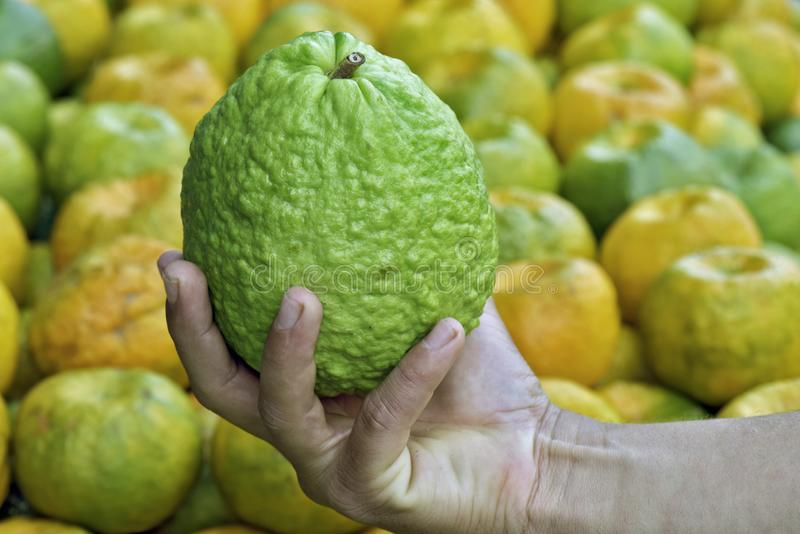 Guava in the hand of open air market seller. Closeup of guava in the hand of open air market seller. Sao Paulo city, Brazil stock photos