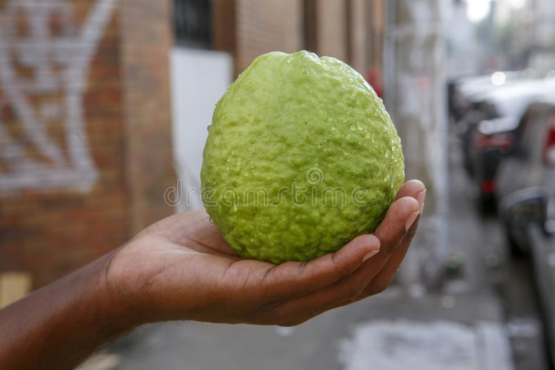 Guava in the hand of open air market seller. Closeup of guava in the hand of open air market seller. Sao Paulo city, Brazil stock images