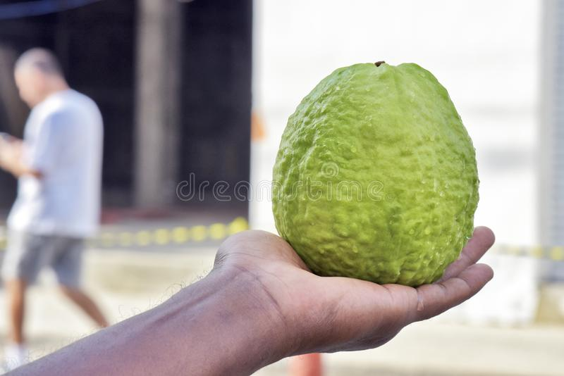 Guava in the hand of open air market seller. Closeup of guava in the hand of open air market seller. Sao Paulo city, Brazil royalty free stock photography
