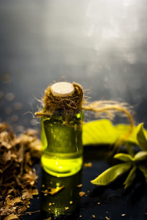 Guava olej z swój liśćmi zdjęcie stock
