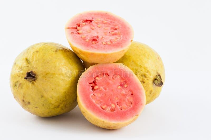 Guava Psidium guajava zdjęcie stock