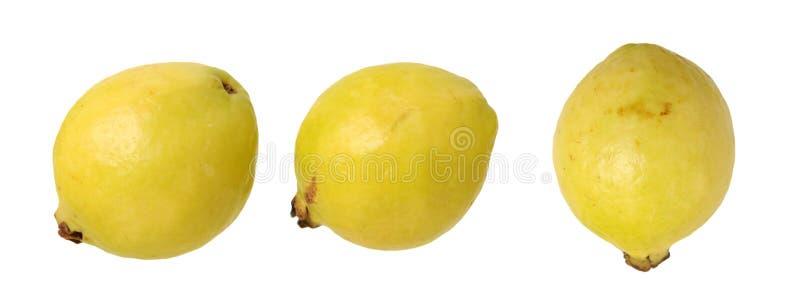 guava tre royaltyfri bild