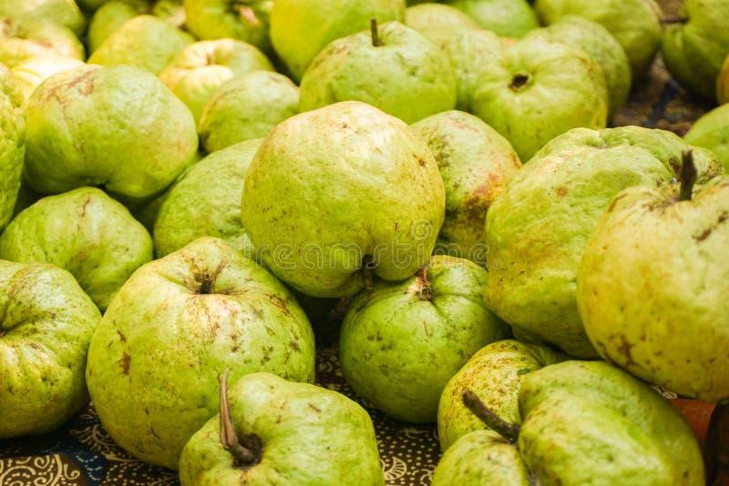 Guavafrukt med grön färg och slut upp gruppen från centrala java arkivbilder