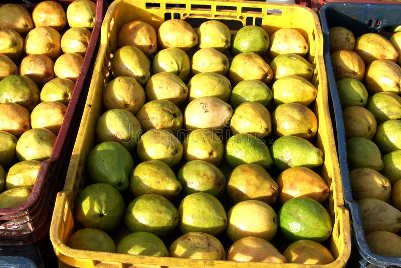 Guavor i marknaden arkivfoton