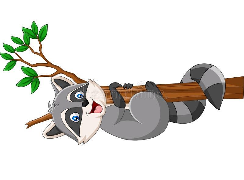 Guaxinim dos desenhos animados no ramo de árvore ilustração stock