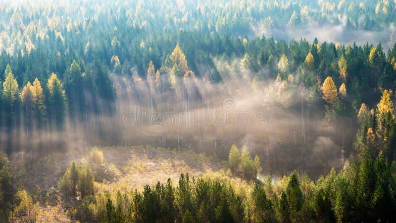 Gubić sposób w mgle fotografia stock