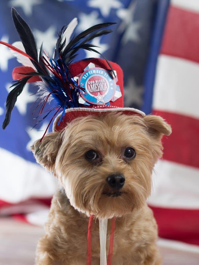 Guden välsignar Amerika Yorkie för September 11 royaltyfri foto