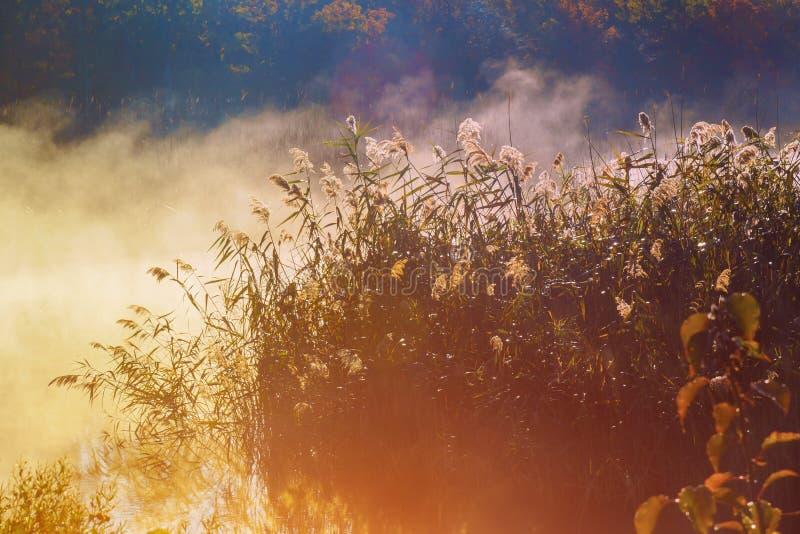 Gudstrålar - barrskog tidigt på morgonen arkivfoto
