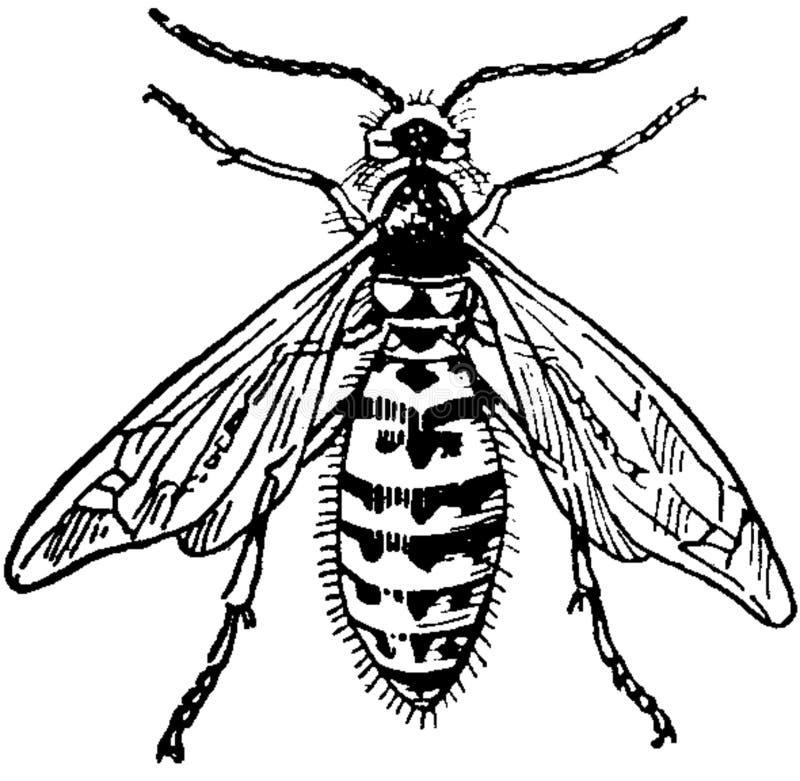 Guêpe-mâle Free Public Domain Cc0 Image