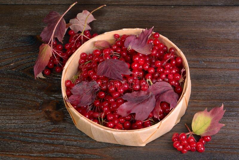 guelder ягод подняло стоковая фотография
