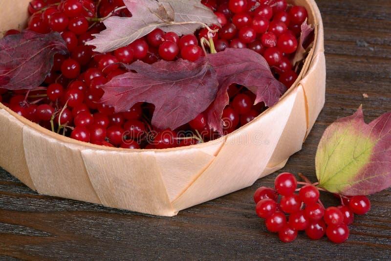 guelder ягод подняло стоковые изображения rf