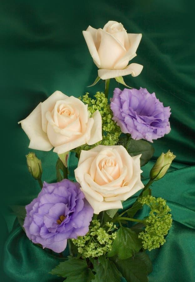 Guelder-rose royalty free stock image