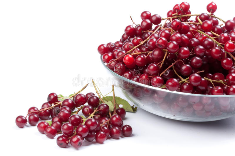 Guelder-rose berry. Plate with mature berries of a guelder-rose (viburnum) on a white background stock photography