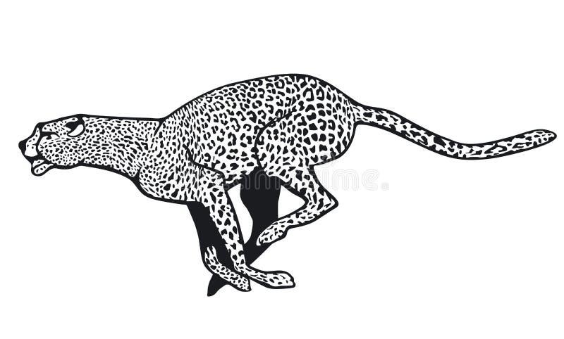 Guepardo ilustración del vector