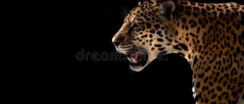 Guepardo, leopardo, jaguar imagen de archivo libre de regalías