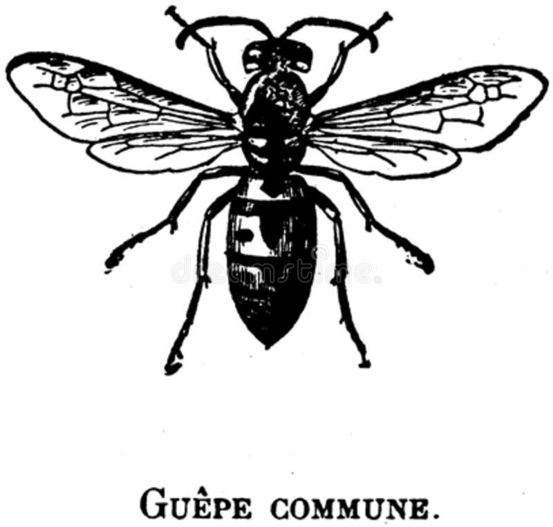 Guepe-oa Free Public Domain Cc0 Image