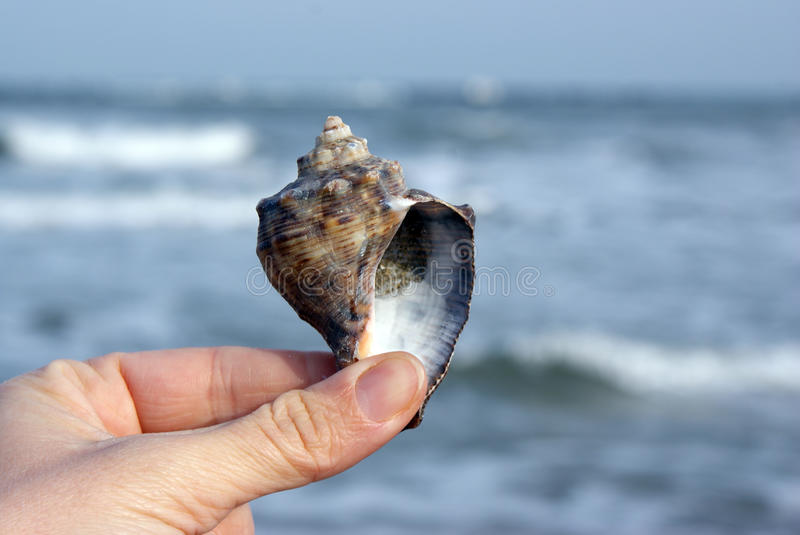 Guessing the future in a seashell stock image
