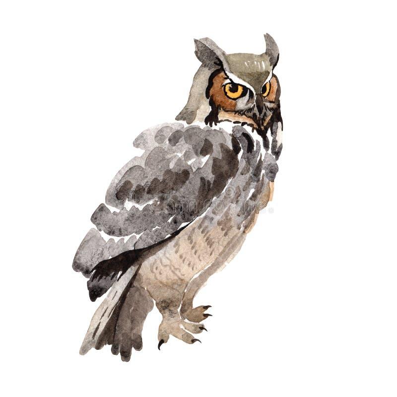 Gufo dell'uccello del cielo in una fauna selvatica da stile dell'acquerello isolata royalty illustrazione gratis