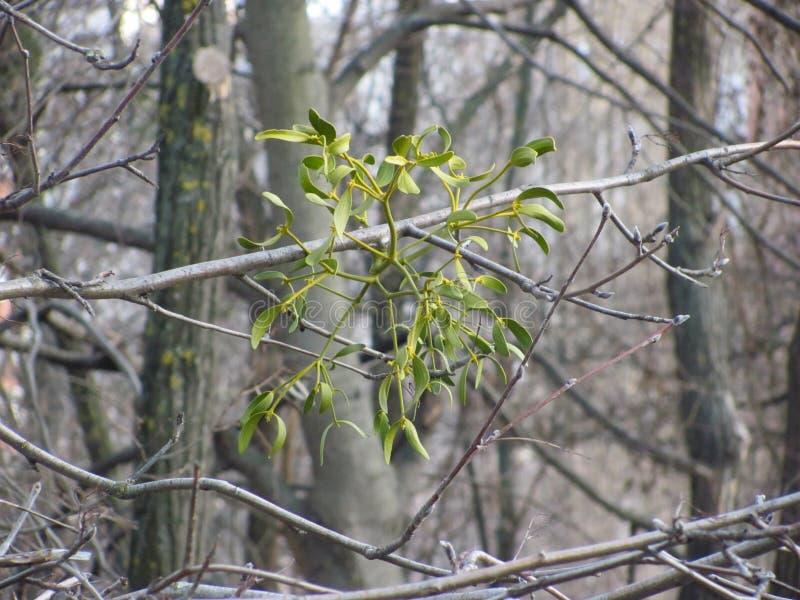 Gui sur la branche d'arbre images stock