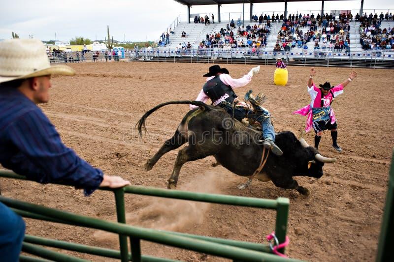 Guida del Bull fotografia stock