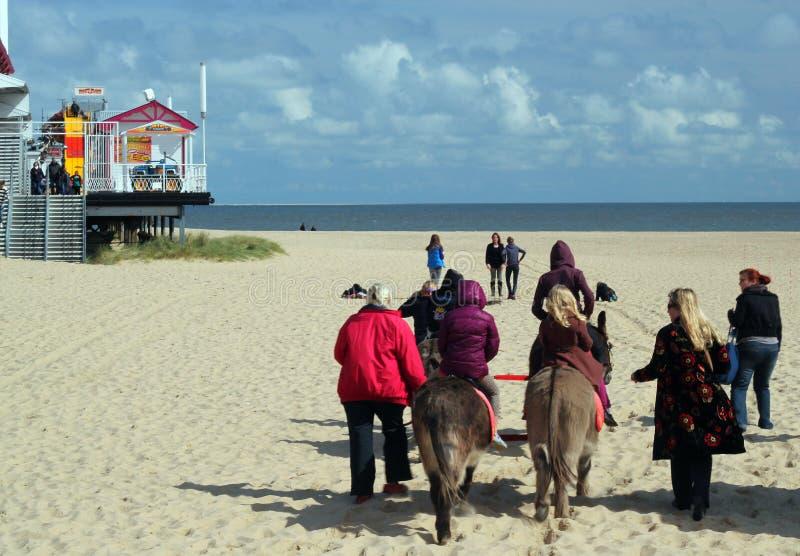 Guida dell'asino sulla spiaggia di Great Yarmouth. immagine stock libera da diritti