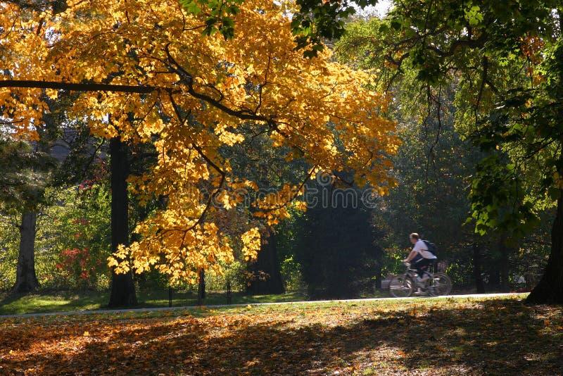 Download Guida della bici immagine stock. Immagine di riding, ombra - 450193