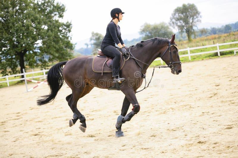Guida della donna sul cavallo immagine stock
