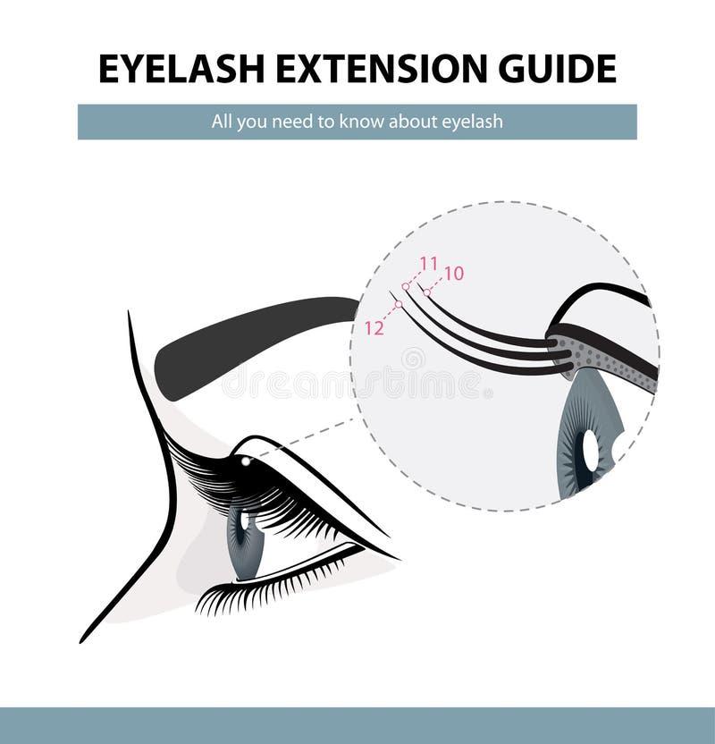 Guida di estensione del ciglio I cigli si sviluppano palpebra Vista laterale Illustrazione di vettore di Infographic illustrazione di stock