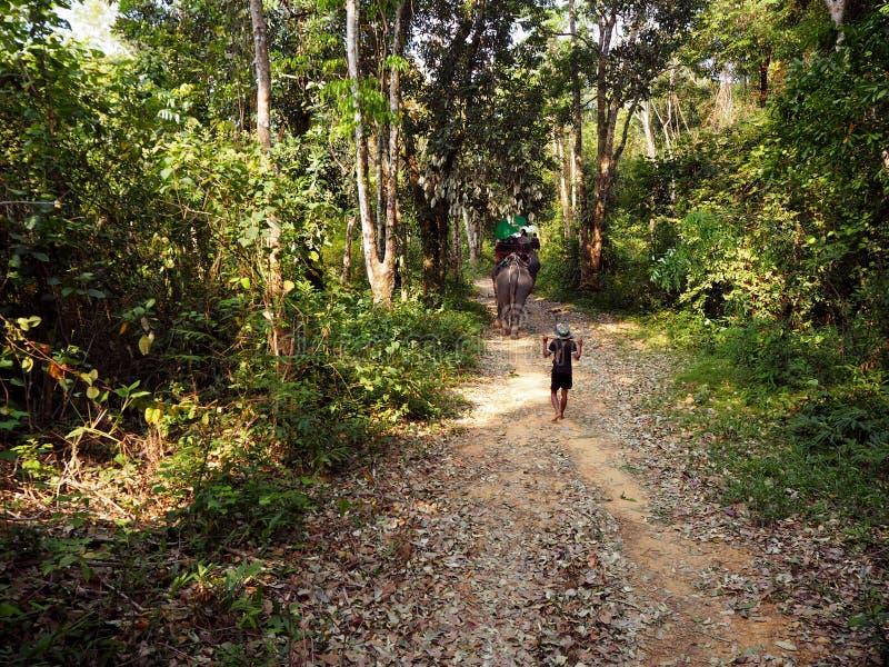 Guidando sul trekking degli elefanti in Tailandia immagini stock libere da diritti