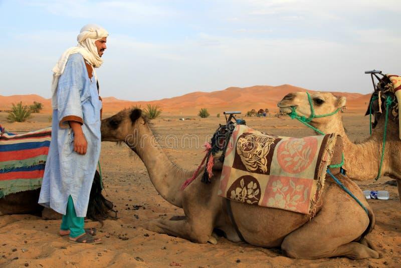 Guide de Berber et ses chameaux photo libre de droits