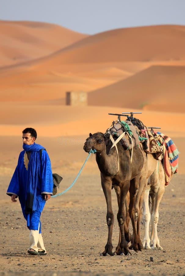 Guide de Berber et ses chameaux photos stock
