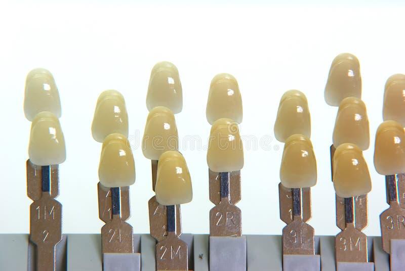 Guide de couleur de dents photo stock