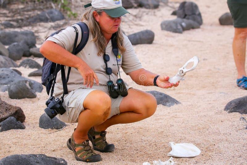 Guide de naturaliste montrant le squelette d'un animal sur Seymour du nord images libres de droits