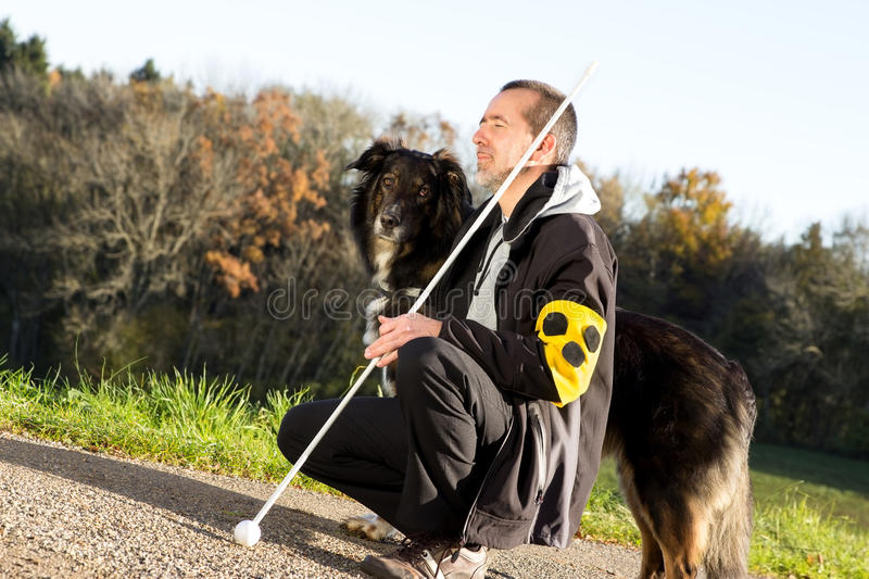 Guide dog is attentive stock photography