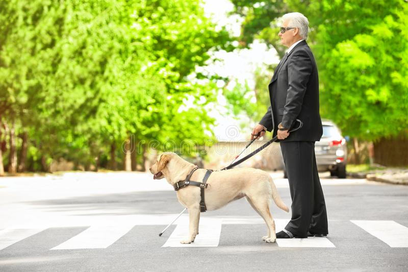 Guide dog helping blind man stock photos