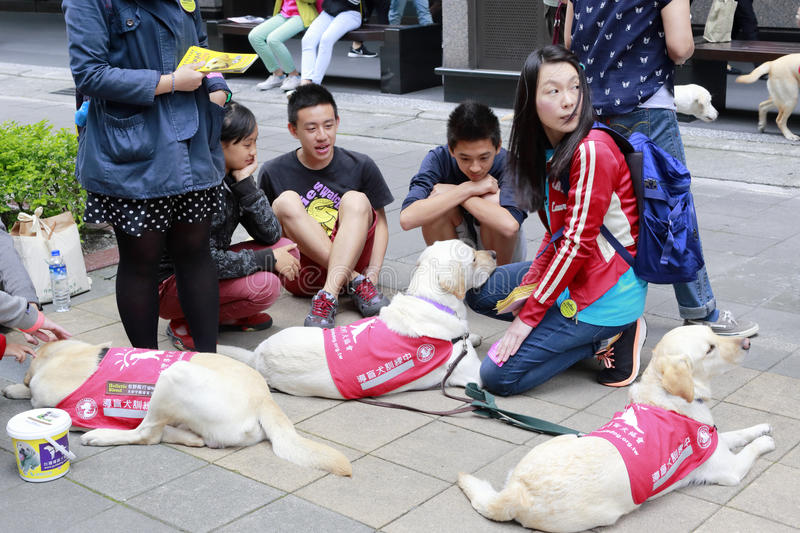 Guide dog. There are many guide dogs in taipei city, taiwan royalty free stock photo