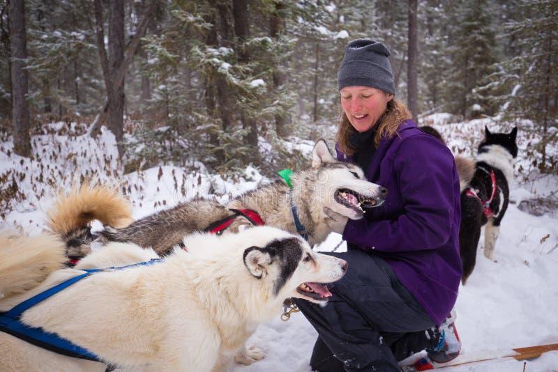 Guide féminin et son équipe de chiens de traîneau d'Inuit en bois d'hiver de neige photos stock