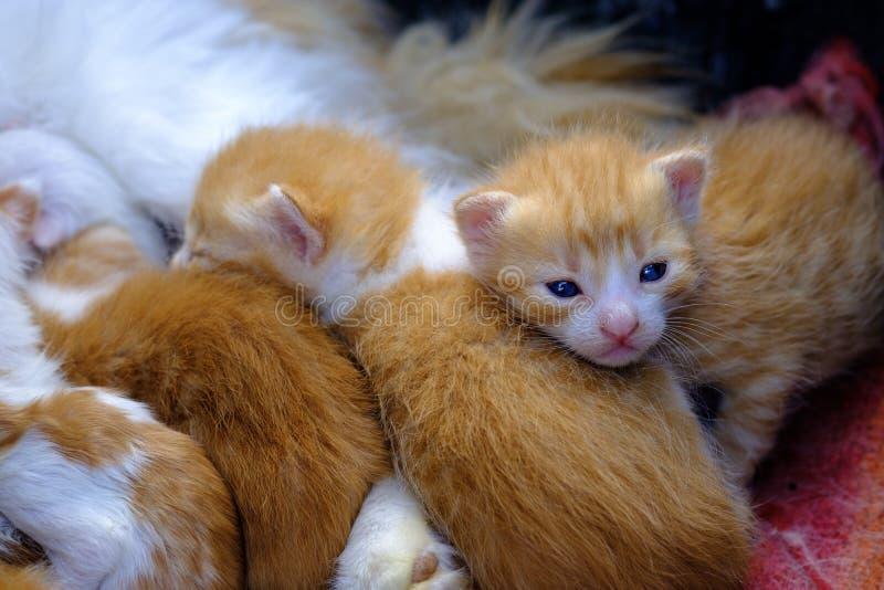 Guide newborn kittens stock images
