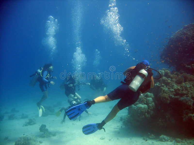 Download Guided stock photo. Image of vacation, diving, underwater - 3352238