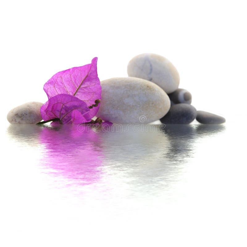 Guijarros del zen con las brácteas de la buganvilla y la reflexión en el fondo blanco imagen de archivo libre de regalías