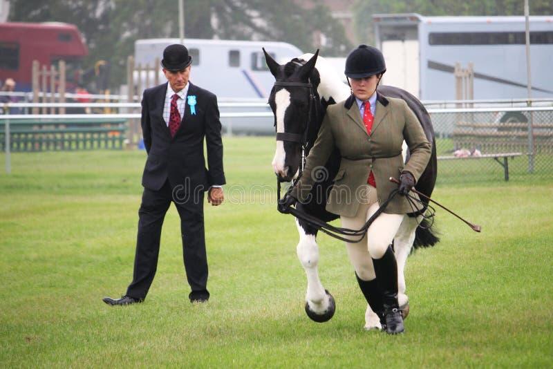 Guildford Anglia, Maj, - 28 2018: Equestrian konkurent w cou obrazy royalty free